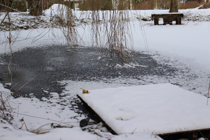 winter, snow, Christmas, nature, lifestyle, photo blog, photo journal, ice