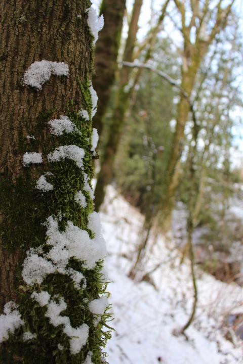 winter, snow, nature, Christmas, lifestyle, lifestyle blog, photo blog, photo journal