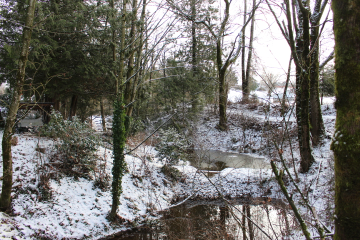 winter, snow, nature, Christmas, forest, lifestyle, lifestyle blog, photo blog, photo journal