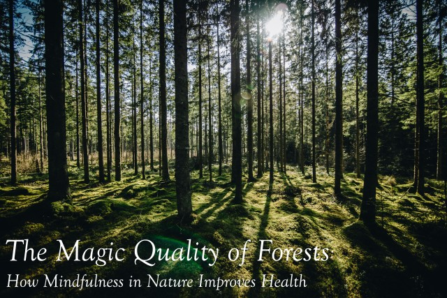 personal development, personal growth, mindfulness, mindfulness meditation, mindful living, self care, nature, benefits of forest bathing, health benefits of forest bathing, forest bathing